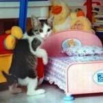 Gato y cama - JPEG, 150x150 pixels, 24.3 KB