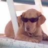 perro playa - PNG, 96x96 pixels, 16.5 KB