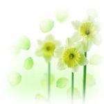 avatar10_ALMZ - JPEG, 150x150 pixels, 11.2 KB