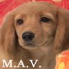 mavnintendog - JPEG, 100x100 pixels, 26.6 KB