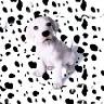 dalmata - JPEG, 96x96 pixels, 13.4 KB
