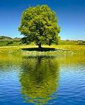 Reflejos del alma - JPEG, 121x150 pixels, 5.4 KB